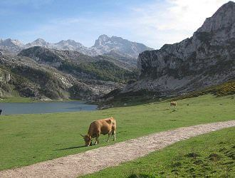 Picos de Europa National Park Cycling Holiday