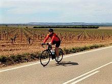 Vineyards Cycling