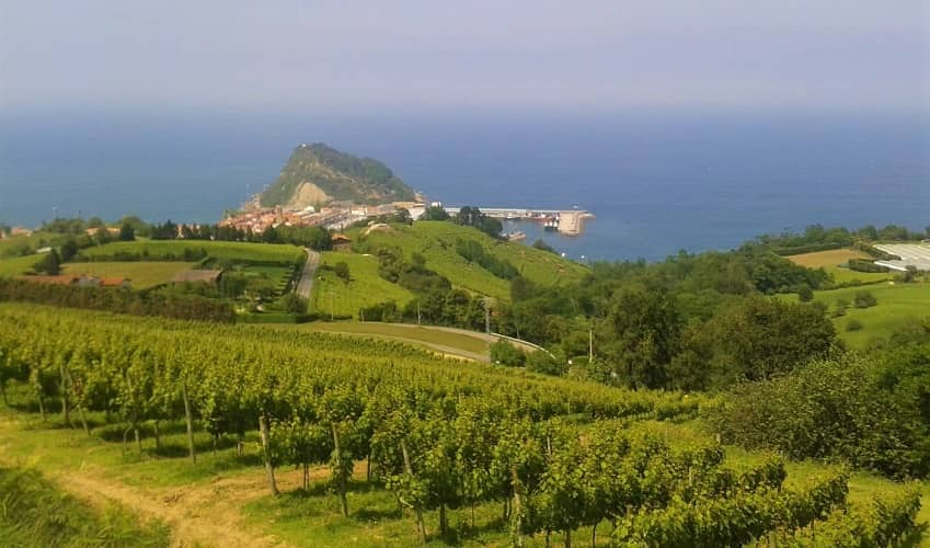Txakoli Vineyards, Basque Country