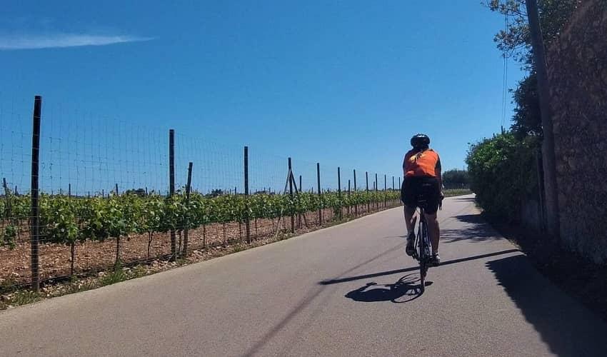 Mallorca Wine Region