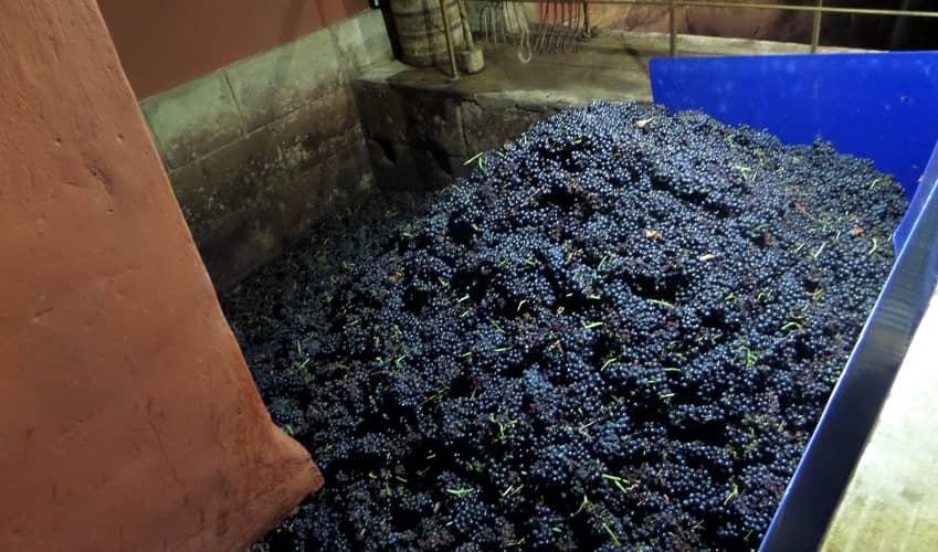Grape Crushing