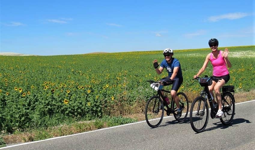 Sunflower Fields - Andalucia