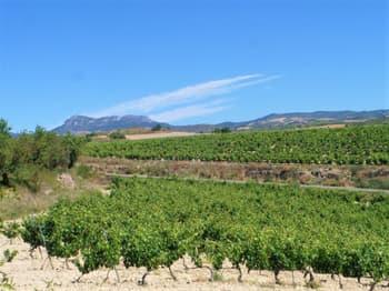 Penedes Vineyards