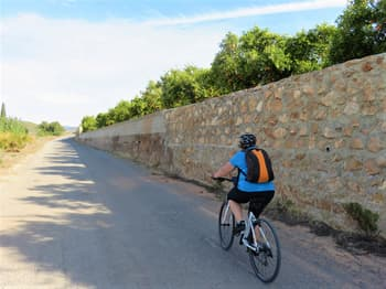 Orange Fields - Tarragona
