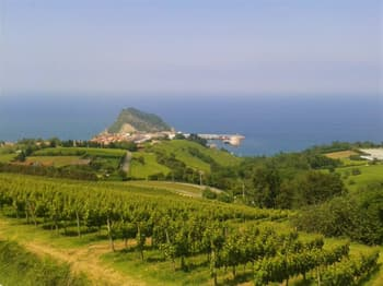 Vineyards in Getaria