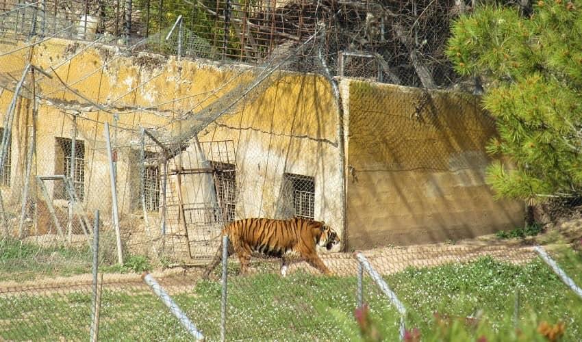 Alto del Tigre