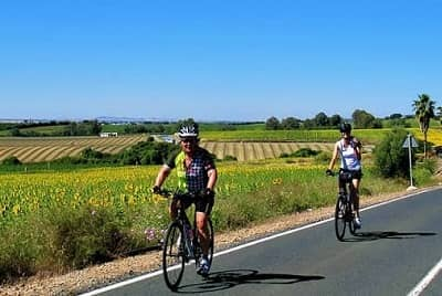 Andalucia Sunflower Fields